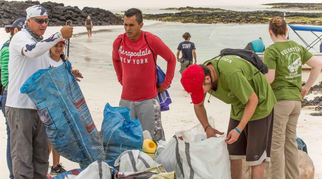 Como parte de sus esfuerzos de Conservación en Galápagos, voluntarios realizan limpiezas de playa.